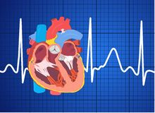 Elektrocardiogram Stock Foto