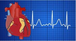 Elektrokardiogramm lizenzfreie abbildung