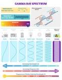 Elektromagnetiska vågor: Radioaktivt gammastrålarspektrum Vektorillustrationdiagram med våglängd, frekvens och vågstrukturen vektor illustrationer