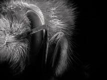 Elektronscannenbild der Hummel stockfoto