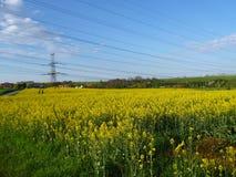 Elektrycznego drutu wierza w żółtym gwałta polu Zdjęcia Royalty Free