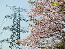 elektrycznego kwiatu wysoki filaru woltaż Obrazy Stock