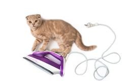 Elektryczny żelazo z śmiesznym kotem na nim odizolowywał na białym tle kosmos kopii Wakacje karciany kreatywnie pojęcie, sztandar zdjęcia royalty free