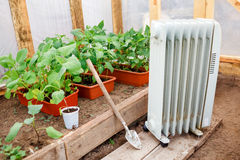 Elektryczny nafciany nagrzewacz w szklarni z rozsadami rośliny, zasadza wczesną wiosnę podczas zimnej pogody Obrazy Stock
