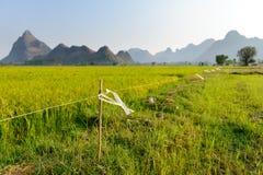 Elektryczny ogrodzenie w ryżu polu obraz royalty free