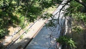 Elektryczny pociąg przechodzi drzewami zbiory
