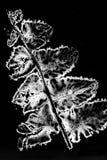 Elektryczny prąd przechodzący przez paprociowego liścia Obraz Royalty Free
