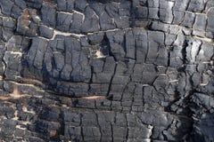 Element des gebrannten-unten Baums Lizenzfreie Stockfotos