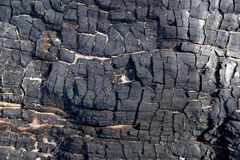 Element des gebrannten-unten Baums Stockfotografie