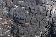 Element des gebrannten-unten Baums Stockfoto