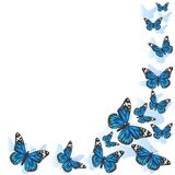 Element of design. Frame made of butterflies. Blue butterflies on a white background. vector image stock illustration