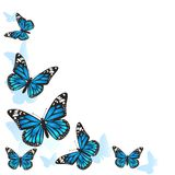 Element of design. Frame made of butterflies. Blue butterflies on a white background. vector image vector illustration