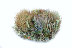 Element of garden composition - elegant lichens Stock Photography