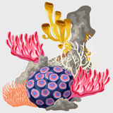Element of the reef with different corals Stock Photos