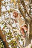 Little girl climbing tree playing in a summer garden - child risky play concept stock images