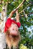 Little girl hanging from a tree playing in a summer garden - child risky play concept stock image
