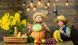 Elementary school fall festival idea. Autumn harvest festival. Celebrate harvest holiday. Children play vegetables. Wooden background. Kids girl boy wear hat royalty free stock images