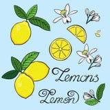 Elemente für das Design einer Zitrone Lizenzfreies Stockfoto