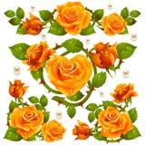Elementi arancioni di disegno della Rosa Immagini Stock Libere da Diritti
