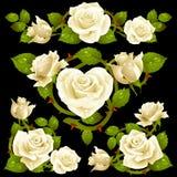 Elementi bianchi di disegno della Rosa Fotografia Stock