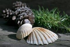Elementi decorativi della natura su un fondo di legno fotografia stock libera da diritti