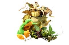 Elementi decorativi di autunno Immagini Stock
