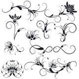 Elementi decorativi di disegno floreale Immagini Stock