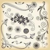 Elementi decorativi floreali Fotografia Stock Libera da Diritti