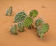 Elementi del deserto fotografie stock libere da diritti