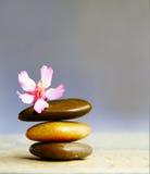 Elementi del fiore Fotografia Stock