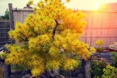 Elementi del giardino giapponese Fotografia Stock