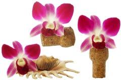Elementi dell'orchidea Fotografia Stock Libera da Diritti