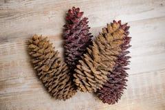 Elementi della decorazione di Natale che consistono dei coni di abete brillanti Fotografia Stock