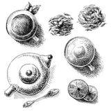 Elementi della raccolta del tè Fotografia Stock