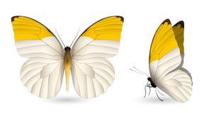 Elementi dettagliati della farfalla Vista laterale fronta e Immagini Stock