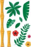 Elementi di bambù tropicali e del pianta Fotografie Stock