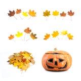 Elementi di caduta e di autunno Immagine Stock