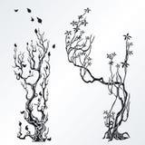 Elementi di disegno degli alberi Fotografie Stock