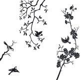 Elementi di disegno degli uccelli Fotografia Stock Libera da Diritti