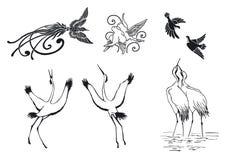 Elementi di disegno degli uccelli Fotografia Stock