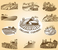 Elementi di disegno di agricoltura biologica Fotografia Stock Libera da Diritti