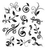 Elementi di disegno floreale Immagine Stock
