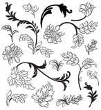 Elementi di disegno floreale Fotografia Stock