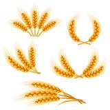 Elementi di progettazione con grano Orecchie dorate naturali di immagine agricola di orzo o di segale illustrazione di stock