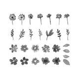Elementi di progettazione dell'acquerello del fiore Fotografia Stock