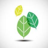 Elementi di progettazione delle foglie verdi Immagine Stock