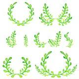Elementi di progettazione di verde dell'acquerello Spazzole, confini, corona Vettore Immagine Stock