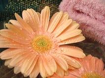 Elementi essenziali della stazione termale (fiori su acqua e sul tovagliolo dentellare) Fotografie Stock Libere da Diritti
