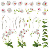 Elementi floreali dei fiori tropicali dell'orchidea nello stile dell'acquerello royalty illustrazione gratis