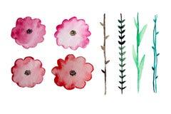 Elementi floreali dell'acquerello Immagine Stock Libera da Diritti